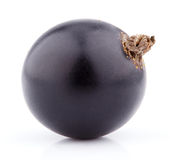 Black currant berry on white Royalty Free Stock Photos