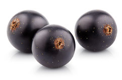 Black currant berry on white Royalty Free Stock Photo