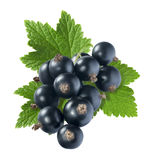 Black currant big with leaf isolated on white background Stock Photo