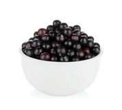 Black currant bowl Stock Image