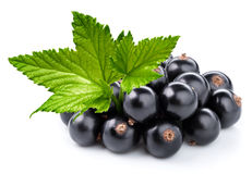 Black currant branch Stock Images