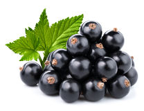 Black currant branch Royalty Free Stock Image