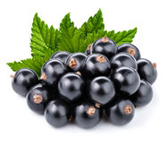 Black currant branch Stock Photography
