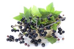 Black currant branches in basket Royalty Free Stock Photography
