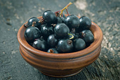 Black currant in a ceramic bowl Royalty Free Stock Photography