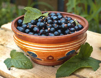 Black currant. In a clay dish Stock Image
