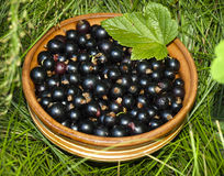 Black currant. In a clay plate in green grass Royalty Free Stock Photography