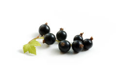 Black-currant close-up Royalty Free Stock Photo
