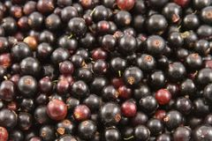Black currant closeup Stock Photo