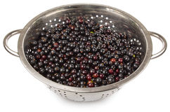 Black currant in colander Royalty Free Stock Photo