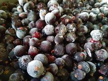 Black currant covered with hoarfrost. Close-up.Frozen berries royalty free stock photography