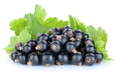 Black currant currants berries fruits fruit isolated Royalty Free Stock Photos