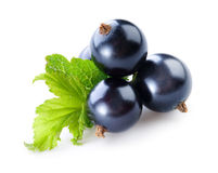 Black currant. Fresh berries isolated on white background Stock Photo