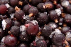 Black-currant Royalty Free Stock Photo