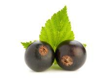 Black currant fruit Stock Photos