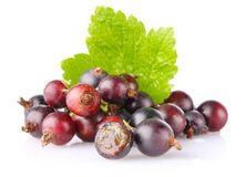 Black currant with green leaf. On white background Royalty Free Stock Photos