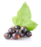 Black currant with green leaf. On white background Stock Images