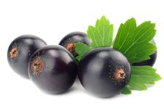 black currant with green leaf isolated on white background. macro stock image
