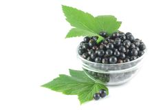 Black currant, green leaves and berries scattered Stock Photos