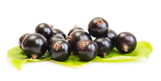 Black currant on green leaves Royalty Free Stock Images