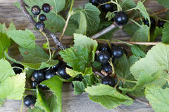 Black currant and green leaves Royalty Free Stock Photo