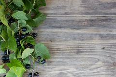 Black currant and green leaves Stock Images