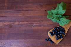 Black currant and green leaves Royalty Free Stock Image