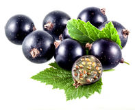 Black currant and a half Stock Images
