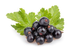 Black currant heap leaves Royalty Free Stock Images