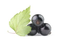 Black currant isolated leaf. Black currant with a leaf on a white background Stock Photography