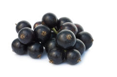 Black currant isolated on white Royalty Free Stock Photography