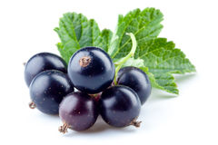 Black currant isolated Stock Images