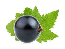 Black currant isolated Royalty Free Stock Photo