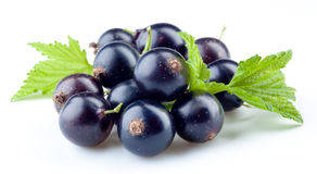 Black currant isolated on white Royalty Free Stock Photo