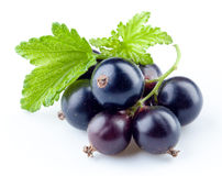 Black currant isolated on white Royalty Free Stock Image