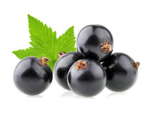 Black currant isolated Royalty Free Stock Photography