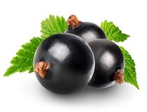 Black currant Royalty Free Stock Image