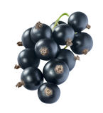 Black currant 3 isolated on white background Stock Photos