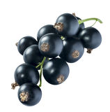 Black currant 4 isolated on white background Royalty Free Stock Photo