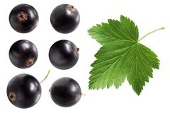Black currant isolated on white background. Berries and leaf Stock Image