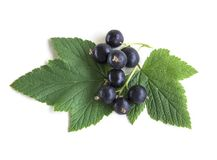 Black currant isolated on white background royalty free stock photography