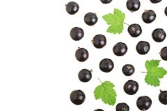 Black currant isolated on white background with copy space for your text. Top view. Flat lay pattern Royalty Free Stock Images