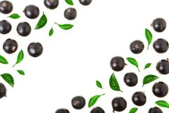 Black currant isolated on white background with copy space for your text. Top view. Flat lay pattern Royalty Free Stock Photo