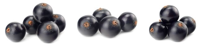 black currant isolated on white background. macro stock images