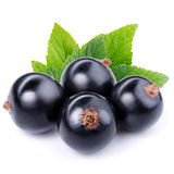 Black currant. Isolated on white backgroundn Stock Images