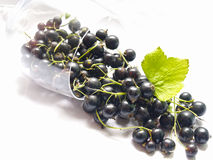 Black currant. Isolated wineglass with black currant on white background Stock Photography