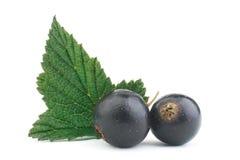 Black currant leaf Stock Photo