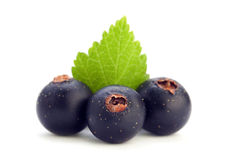 Black currant with leaf Stock Photography