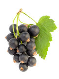 Black currant with leaf Royalty Free Stock Photos