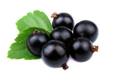 Black currant with leaf Stock Image